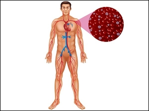 Foods That Will Clean Your Arteries Protect You From Hear