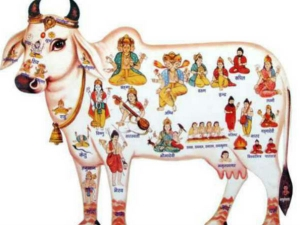 Importance Worshipping Holy Cow