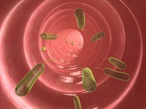 Here Are Ways Which You Might Get Parasitic Infection