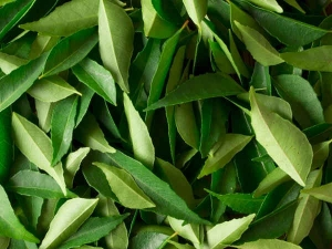 Diy Curry Leaves Hair Mask Itchy Scalp