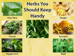 Healing Herbs That You Should Keep Handy