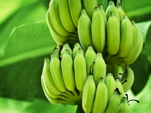 This Green Banana Mixture Will Control Diabetes