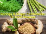 Combination Moringa Ginger Fight Several Deadly Diseases