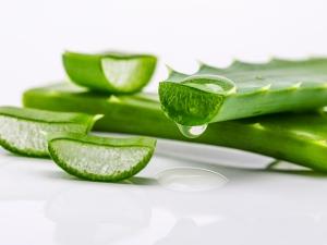 Aloe Vera Beauty Tips 6 Ways Use Aloe Vera Skin