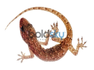 Did You Know That Lizards Can Predict Person S Future