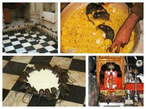 Karni Mata Mandir Temple Rats