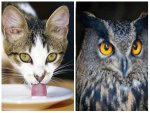 Ten Common Animal Myths That You Need Stop Believing Now