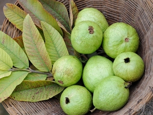 Guava For Hypertension Why Eating The Tropical Fruits May Help Regulate Blood Pressure