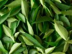 Five Home Remedies Using Curry Leaves For Hair Care