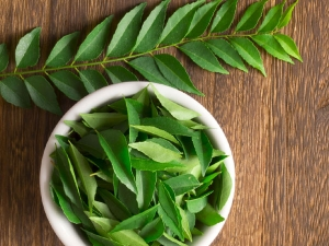 Diabetes Curry Leaves May Help Keep Diabetes And Blood Sugar Under Control