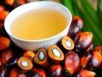 Palm Oil Benefits Drawbacks