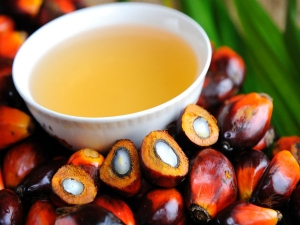 Palm Oil Benefits Drawbacks