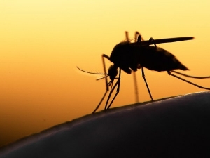 Dangerous Diseases Spread By Mosquitoes That We Must Know About