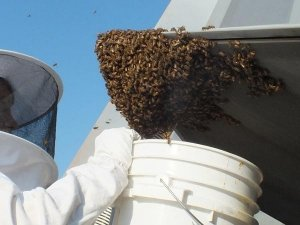 How To Get Rid Of A Beehive