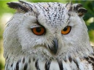 Why Owls Are Associated With Wealth And Wisdom