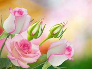 Flowers For Your Garden To Boost Your Mood