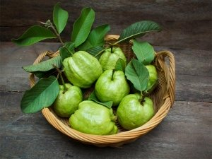 Here Is How Guava Leaves Help People With Diabetes