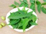 Amazing Benefits Chewing Neem Regularly