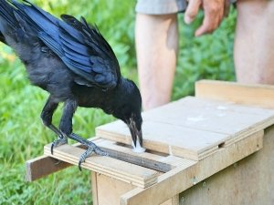 A French Theme Park Is Using 6 Trained Crows To Clean Up Trash