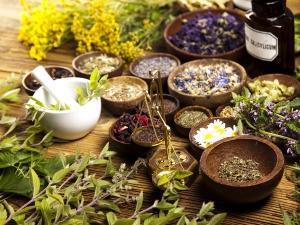 Herbs That Boost Memory Focus Brain Health
