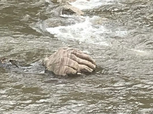 A Hand Like Structure Appeared In Munnar After The Kerala Floods