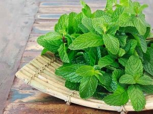 How To Remove Dark Circles With Mint Leaves