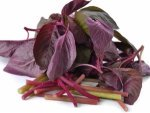 Wonderful Benefits Of Red Spinach Nutrition Recip
