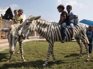 Disturbing Pics Of Animal Life In A Zoo