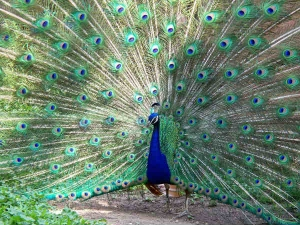Vastu Tips Remove All Your Doshas With A Peacock Feather