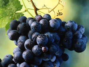 Amazing Black Grapes Benefits Health Gorgeous Skin