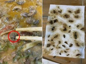 Woman Ordered Meal And Found 40 Dead Cockroaches In It