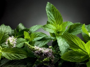 Mint Health Benefits Side Effects And Recipes