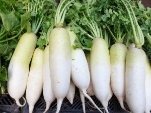 Benefits Of Radish For Skin Hair And How To Use