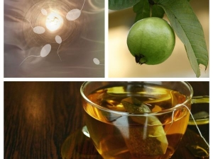 How Guava Leaves Can Increase Sperm Count