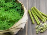 Health Benefits Of Drumstick Leaves During Pregnancy