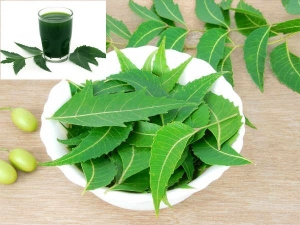 Neem For Diabetes How Does The Wonder Herb Help Manage Bloo