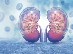 Reasons Behind The Swollen Kidney And How Its Effect To Hea