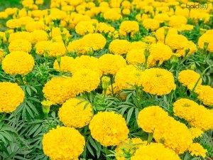 Home Gardening Tips Telugu Living Room Design Ideas Telugu Pet Care Tips Telugu À°¹ À°— À°° À°¡ À°¨ À°— À°š À°Ÿ À°• À°² À°¤ À°² À°— Boldsky Telugu