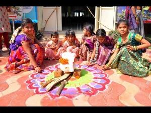 Sankranti Special 2020 How To Prepare Cocks For Fighting In Andhra Pradesh
