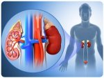 Pyelonephritis Symptoms Causes Risk Factors And Preventions