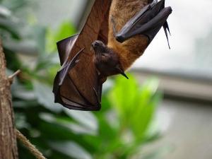 Presence Of Bat Coronavirus In Two Indian Bat Species Icm Study Finds