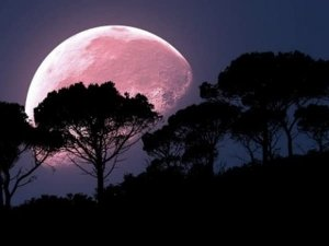 What Is Super Pink Moon And What Does It Mean In Telugu