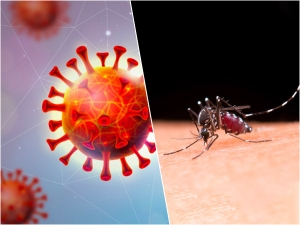 Difference Between Symptoms Of Covid 19 And Dengue