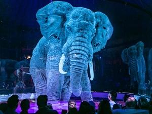 World Elephant Day Interesting Facts About Elephants