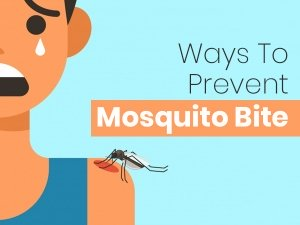Natural Ways To Get Rid Of Mosquitoes Inside The House