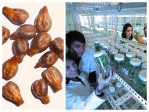 Grape Seeds For Colon Cancer Treatment