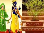 Tulsi Vivah 2020 Do These Remedies To Fulfil Your Desires