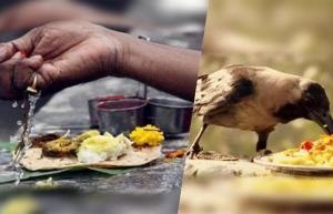 Reasons Why Crows Eat Flour In Telugu