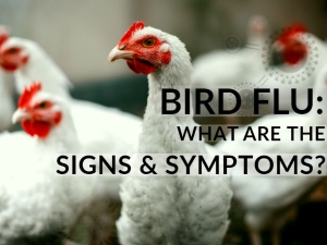 Bird Flu How Does It Spread To Humans Things You Can Do To Prevent The Viral Infection