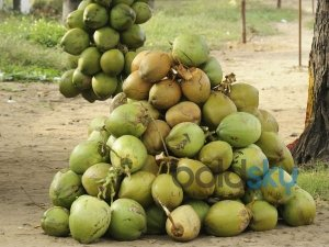 Is Coconut Water Good For Weight Loss